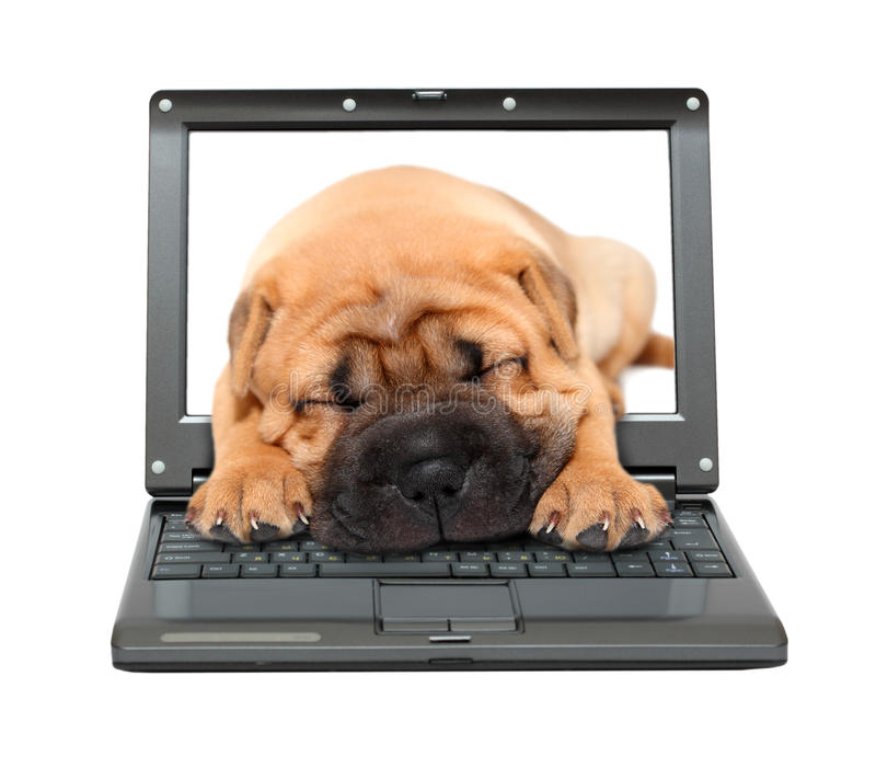 Laptop with sleeping puppy dog royalty free stock image