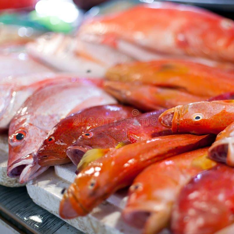Lapu-lapu、红鲷鱼和金枪鱼,在市场上的海鲜 免版税库存图片