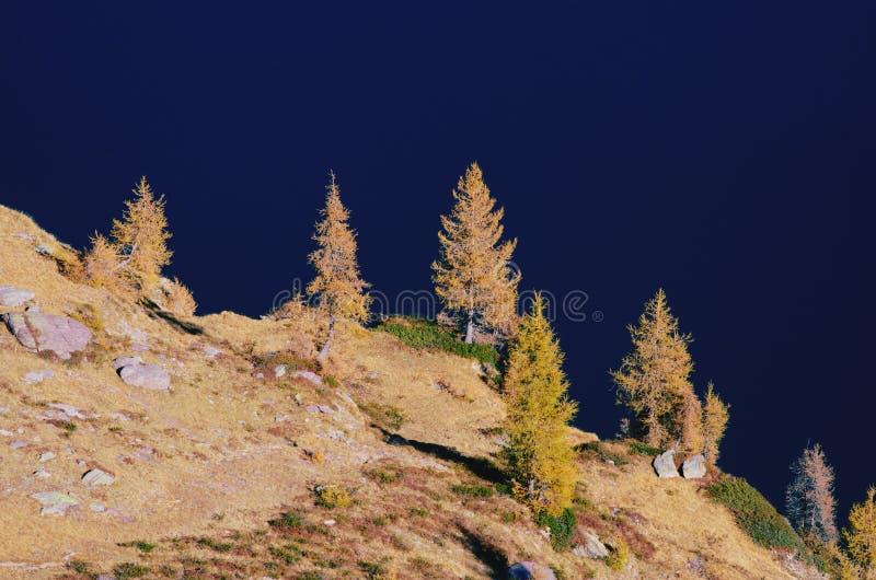 Larício - outono nos cumes imagens de stock royalty free