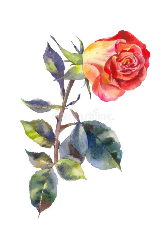 A laranja aumentou na aquarela Um vermelho levantou-se no branco Terno para o convite, cartão, projeto do casamento ilustração stock