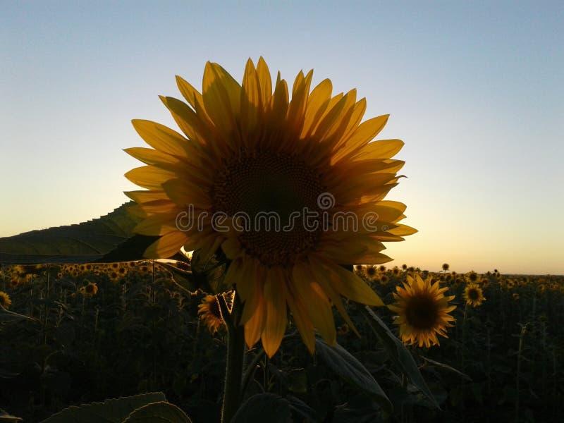 Laranja bonita das flores imagem de stock royalty free