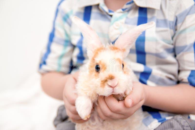 Laranja pequena bonito e coelho branco da cor com orelhas grandes coelho nas mãos do menino feche acima de - conceito dos animais imagem de stock royalty free