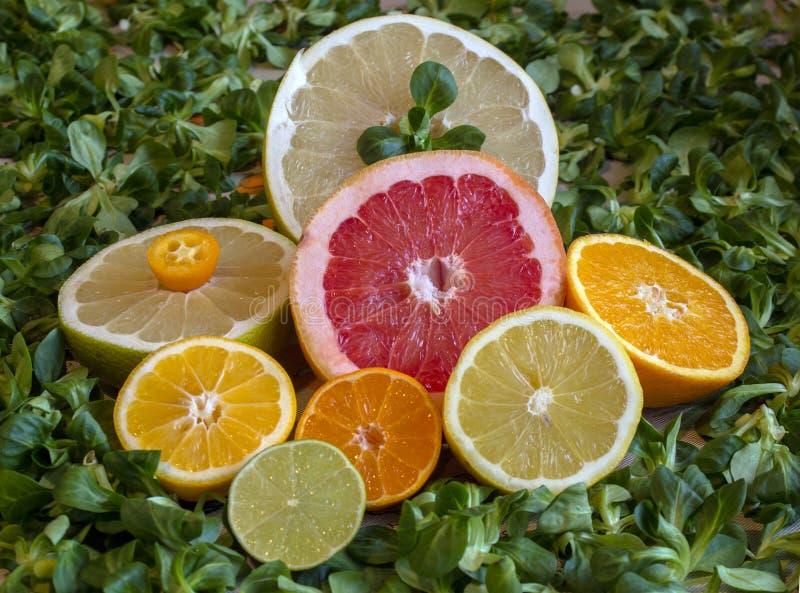 Laranja, toranja, mandarino, pomelo, séries, limão, cal e kumquat imagens de stock