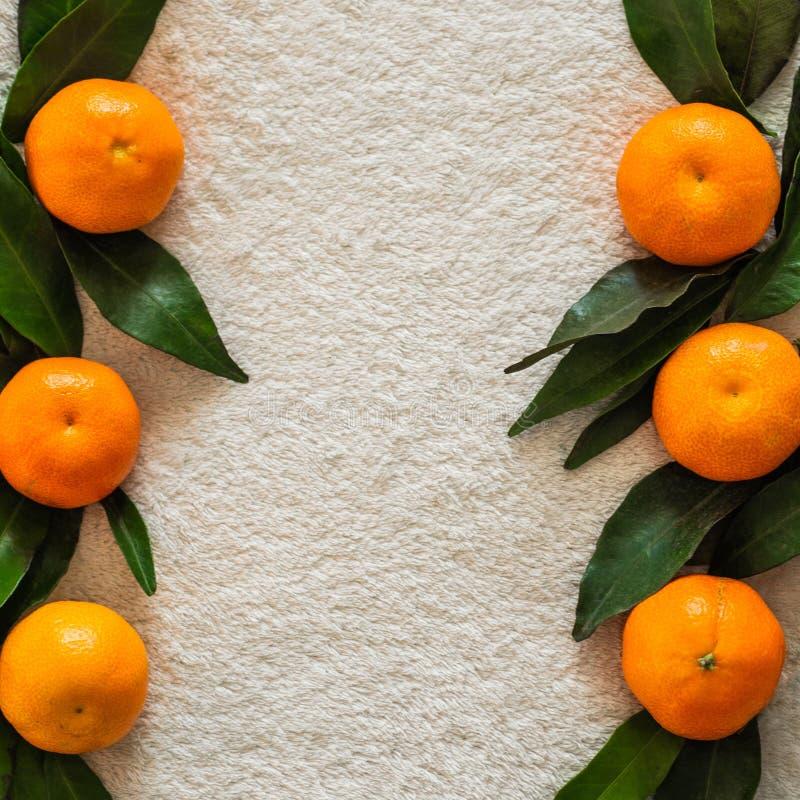 Laranjas das tangerinas, os mandarino, clementina, citrinas com folhas, fundo, espaço da cópia foto de stock royalty free