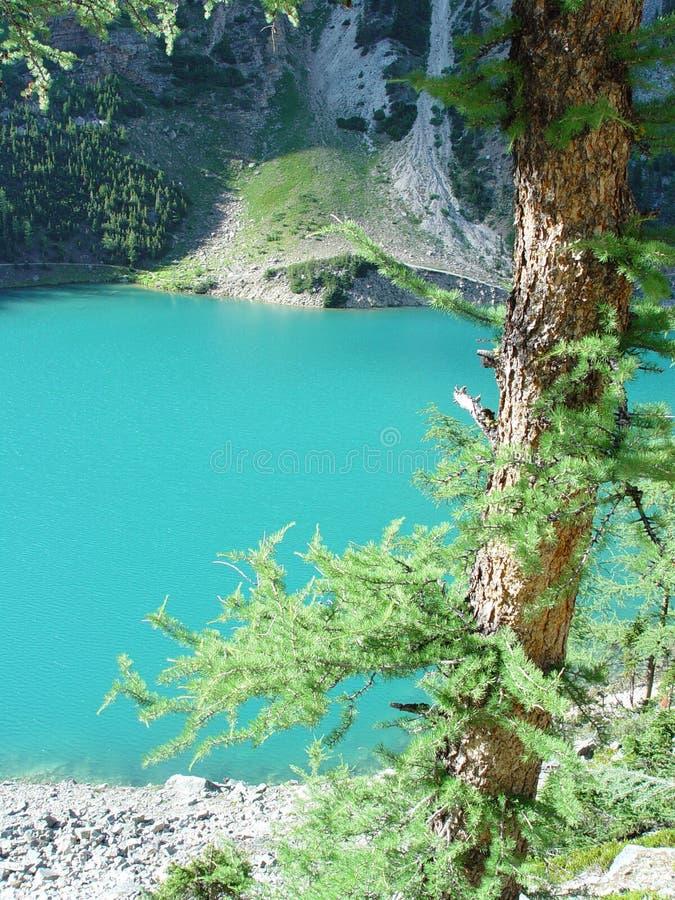 Larch tree and mountain lake stock image