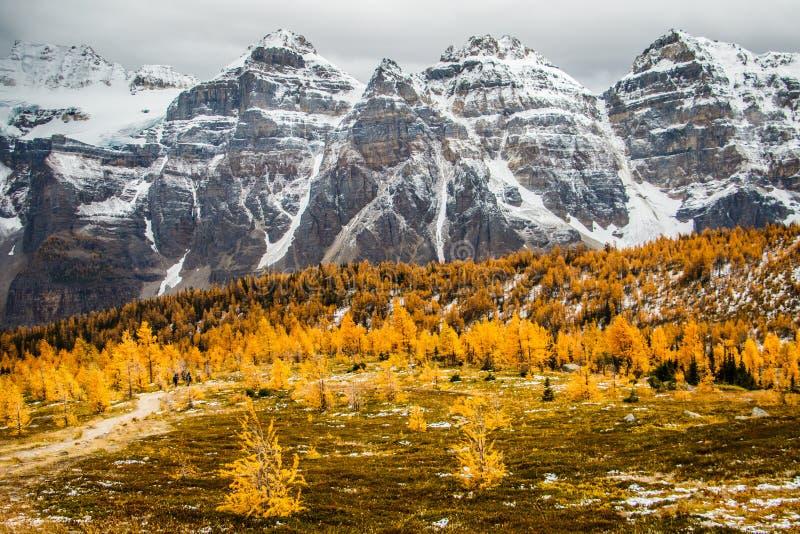 Larch vale no lago Louise no Parque Nacional de Banff, Canadá imagem de stock