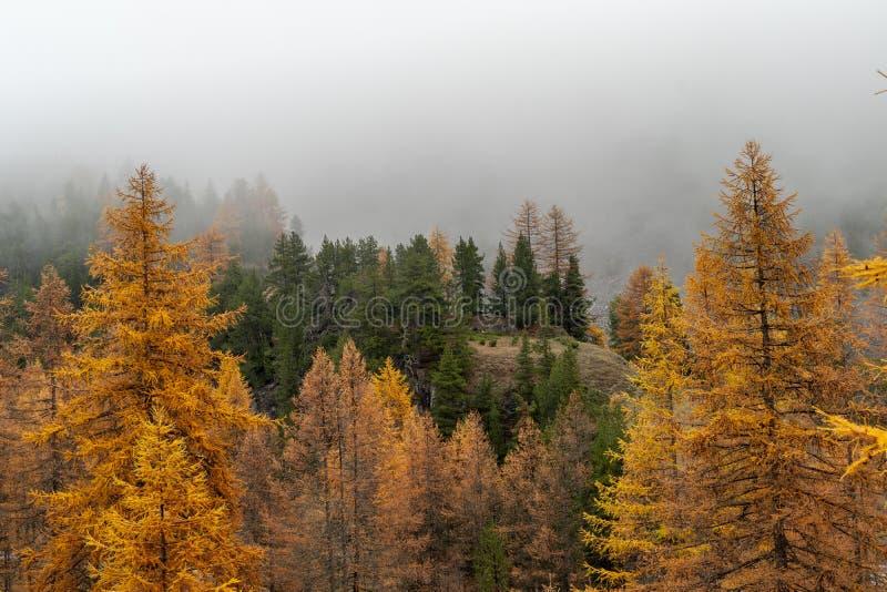 Larchs森林山景城在秋天 免版税库存图片