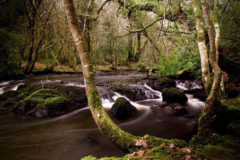 Larga exposición del río forestal imagenes de archivo