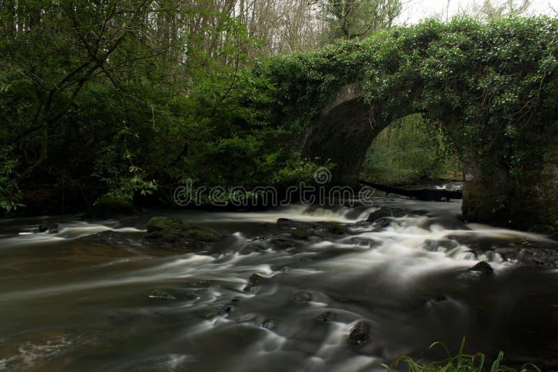 Larga exposición del río forestal en el condado de Cavan fotos de archivo