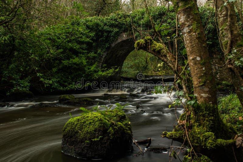 Larga exposición del río forestal en el condado de Cavan imagen de archivo