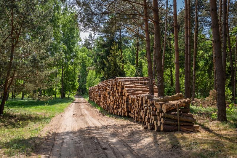 Large amount of cut wood after the storm in Poland. Europe royalty free stock photography