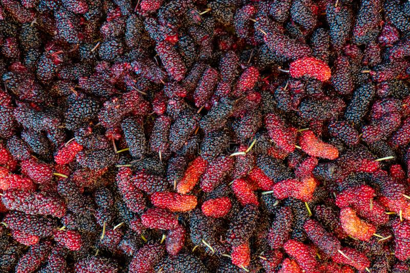 A large amount of ripe fruit and berries. Fruit tastes sour royalty free stock image
