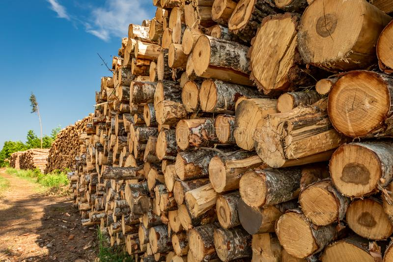 Large amount of tree felling after a gale. Europe stock photo
