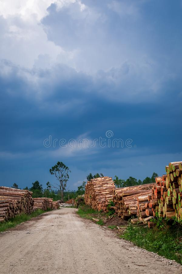 Large amount of tree felling after a gale. Europe stock photography