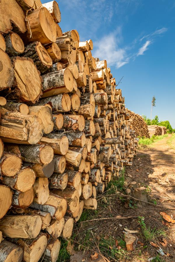 Large amount of tree felling after a gale in summer. Europe royalty free stock image