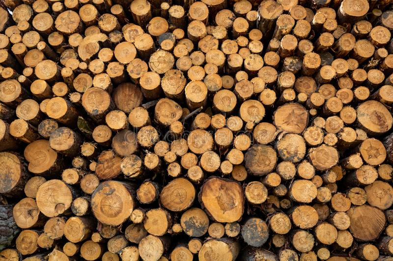 Large amount of tree felling in spring as background. Europe royalty free stock images