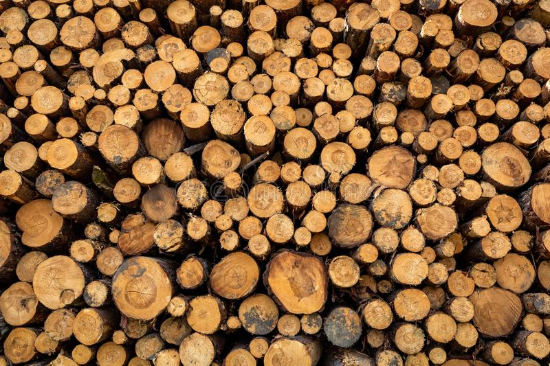 Large amount of tree felling in spring. Europe stock photo