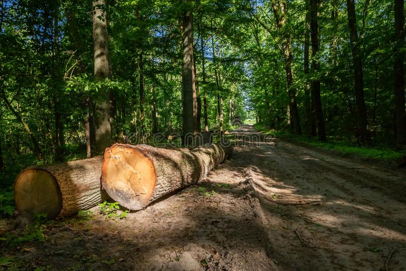 Large amount of tree felling in spring. Europe royalty free stock photography