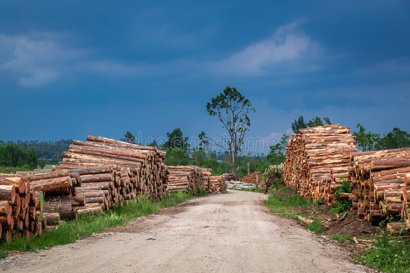Large amount of tree felling after the storm. Europe royalty free stock photos