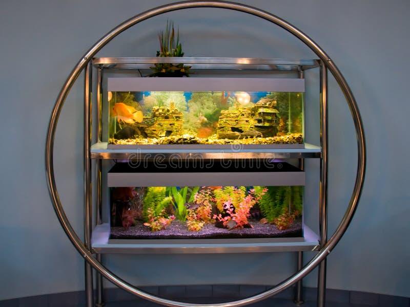 Download Large aquarium stock photo. Image of round, plants, aquatic - 20098432