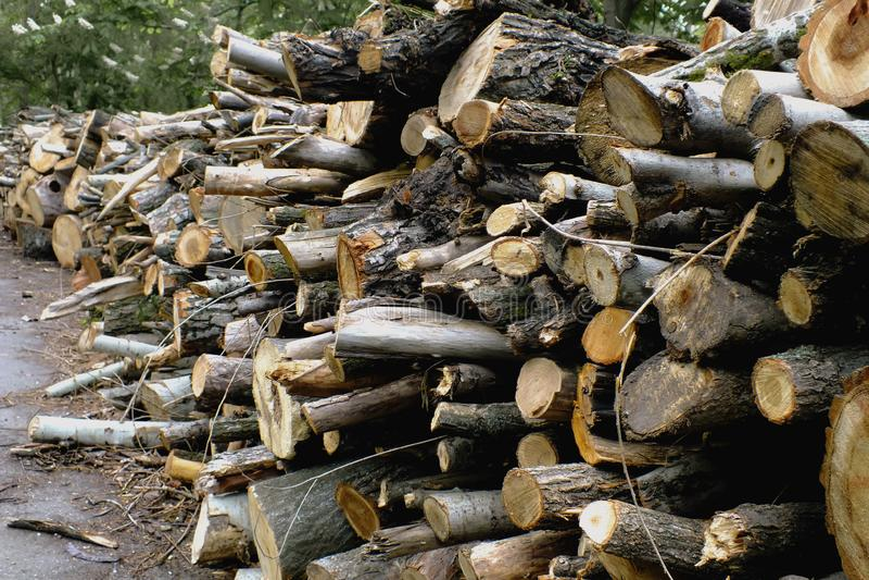 Large armful of firewood stock photo
