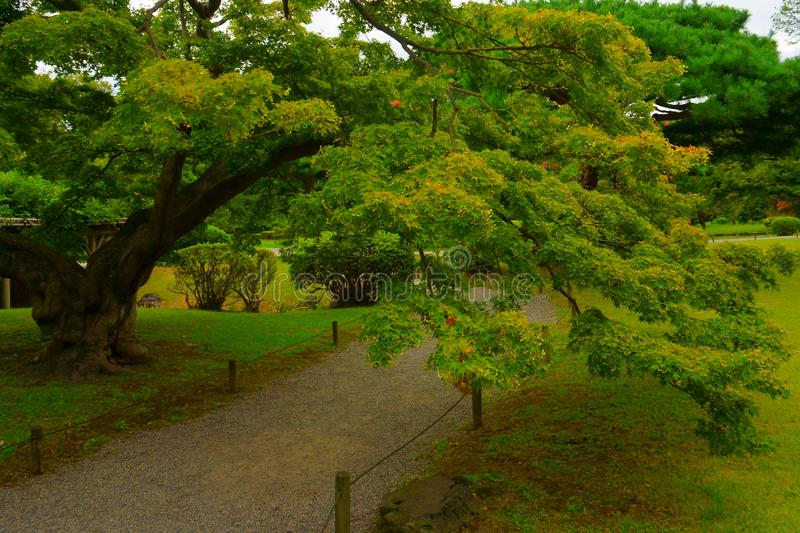 Large and attractive landscape garden in Tokyo. Hamarikyu Gardens, Japan. Japanese maple royalty free stock images
