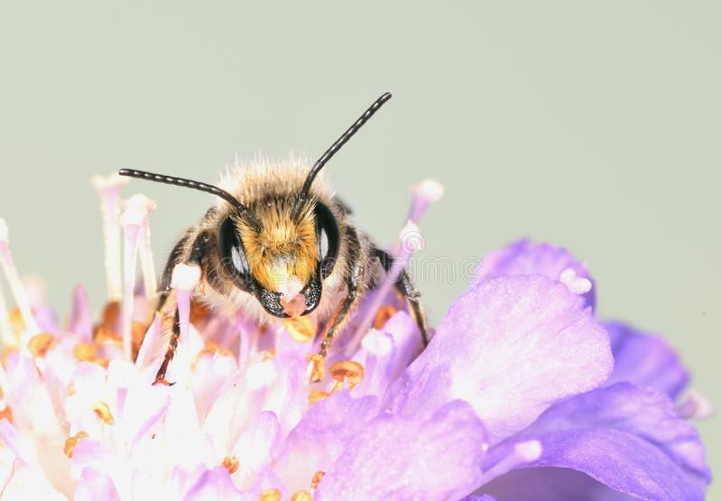 Download The large bee stock image. Image of world, animal, summer - 8115849