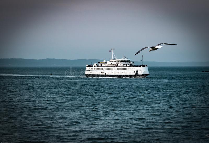 A large bird approaches the deck of a ferry at Cape cod MA royalty free stock photography