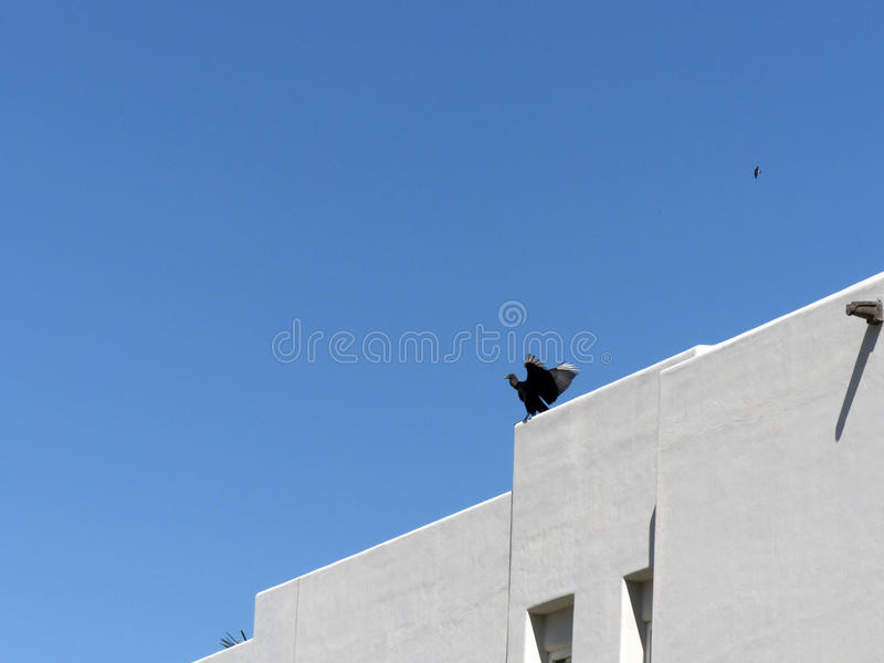 Large bird extending its wings. A large bird sits atop a Mexican residence with its wings spread royalty free stock image