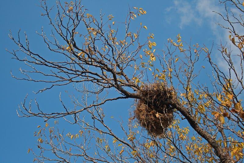 LARGE BIRD`S NEST IN TREE stock photo