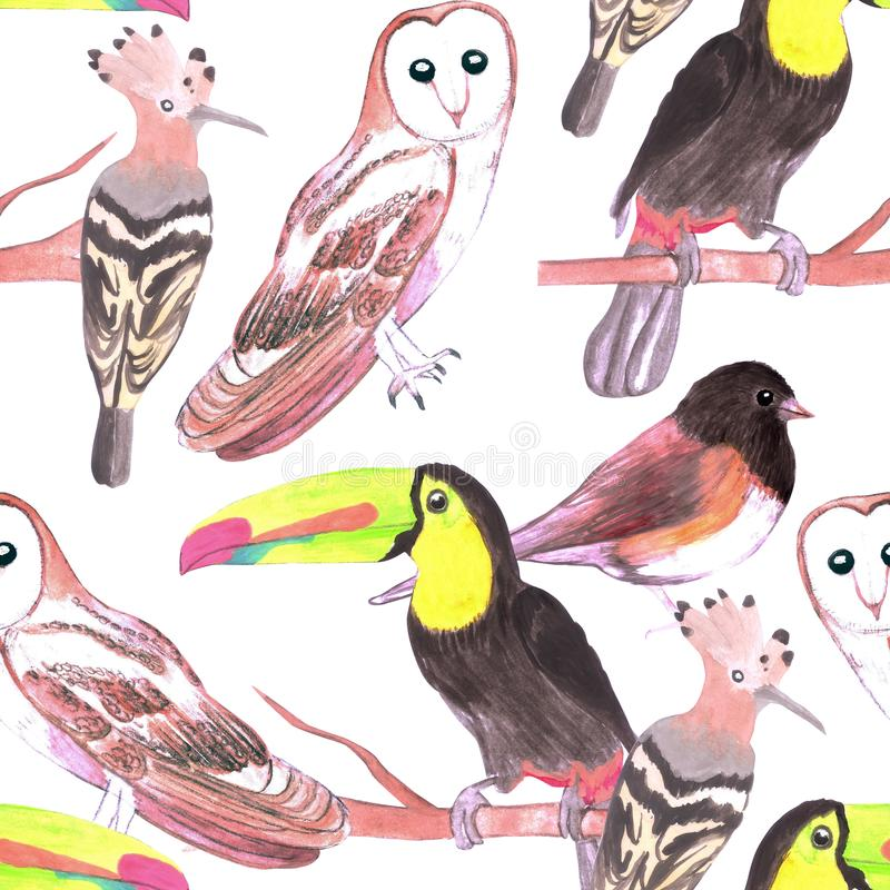 Large birds seamless watercolor background- toucans, juncos, hoopoe and barn owl. S stock illustration