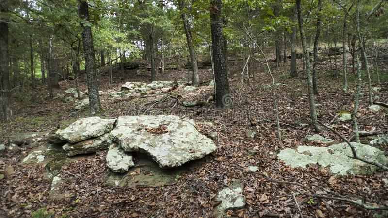 Forest in eastern Oklahoma with trees and rocks royalty free stock photos