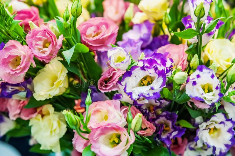 A large bouquet of eustoma in a flower shop is sold as a gift box. Farmer`s market. Background.  royalty free stock photos