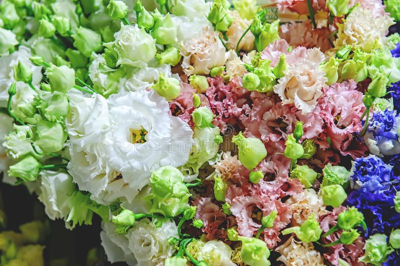 A large bouquet of eustoma in the flower shop is sold as a gift box. Farmer`s market. Close the horizontal frame.  royalty free stock photos