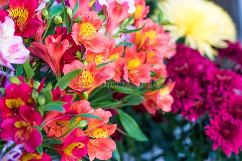 A large bouquet of multi-colored alstroemerias in the flower shop are sold in the form of a gift box. Colorful Alstroemeria flowe stock photo