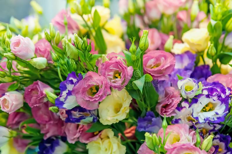 A large bouquet of multi-colored alstroemerias in the flower shop are sold in the form of a gift box. The farmer`s market. Close. Up. The horizontal frame royalty free stock images
