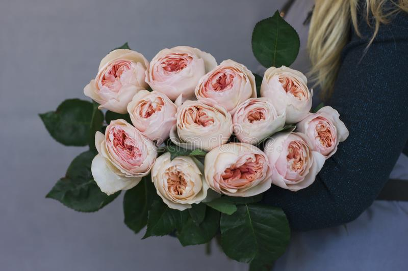 The large bouquet of pink peony roses in female hands stock image