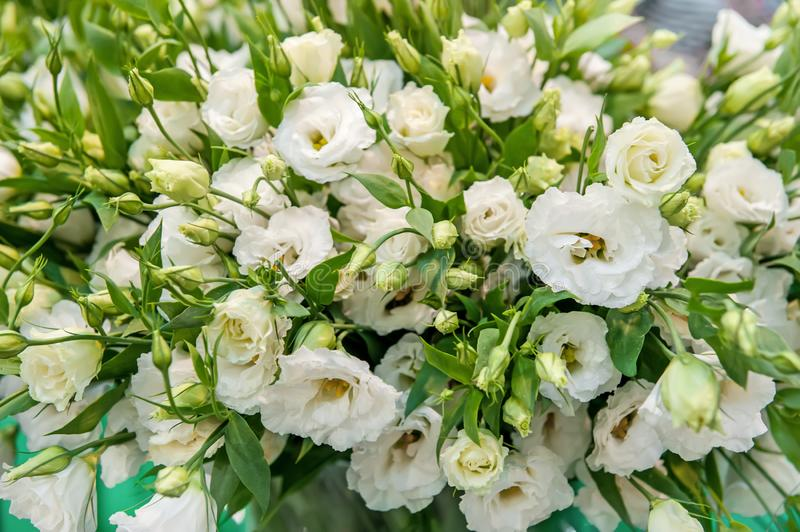 A large bouquet of white alstroemerias in a flower shop is sold as a gift box. The farmer`s market. Close up. A horizontal frame royalty free stock image