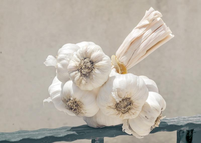A large bunch of dried garlic against backdrop of white house wall. Traditional food ingredient royalty free stock photo