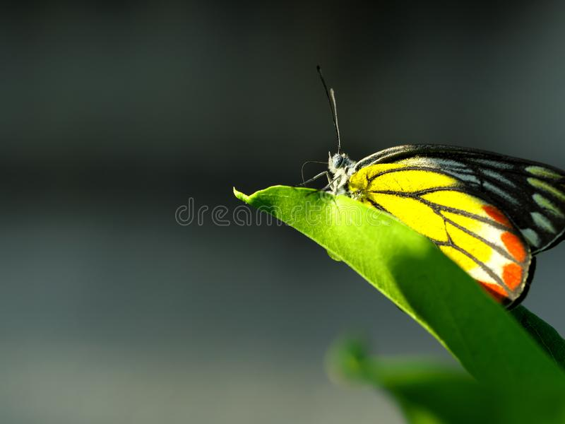 A large butterfly on a green leaf. Shoot with Panasonic G9 for high quality stock image