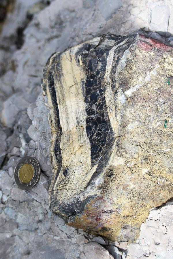 Black and white striped chert nodule within Stearing Island Limestone conglomerate with a Canadian coin for scale, found on Cow He royalty free stock image