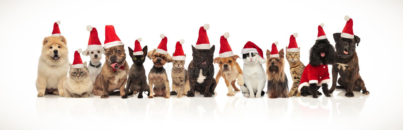 Large christmas team of many cute cats and dogs stock photography