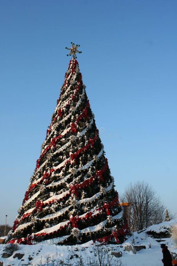 Large christmas tree royalty free stock image