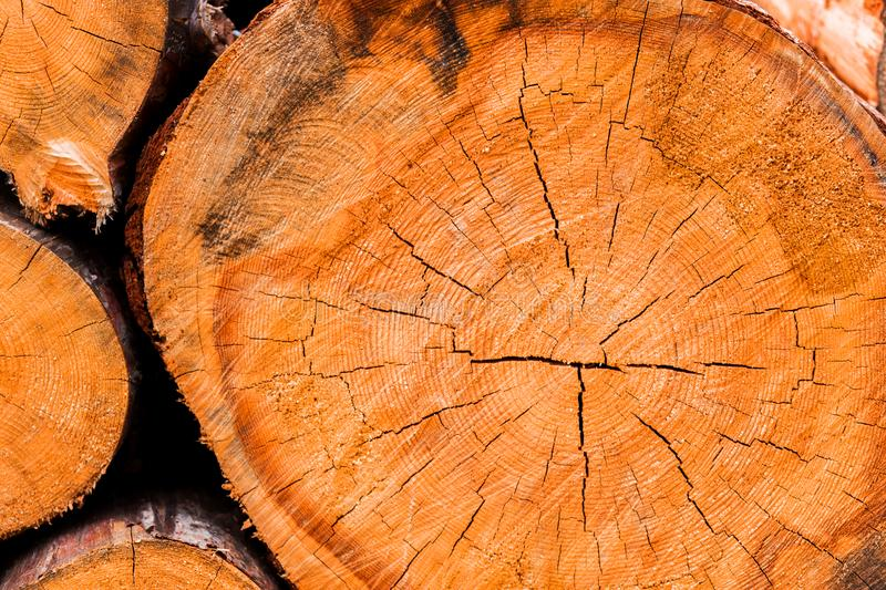 Large circular piece of wood cross section with tree ring texture stock photos