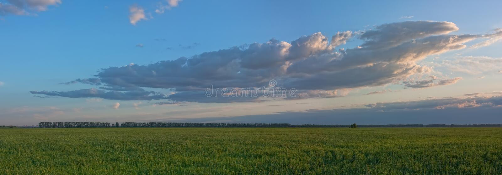 A large cloud at sunset. Panorama from a large cloud at sunset on the background of green field royalty free stock images