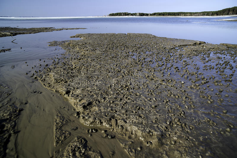 A large clump of mollusks on the shore of a melted river. Siberia, the Novosibirsk region, the sea of Ob stock photos