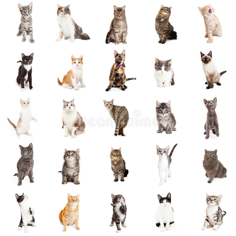Large Collection of Cats and Kittens royalty free stock image