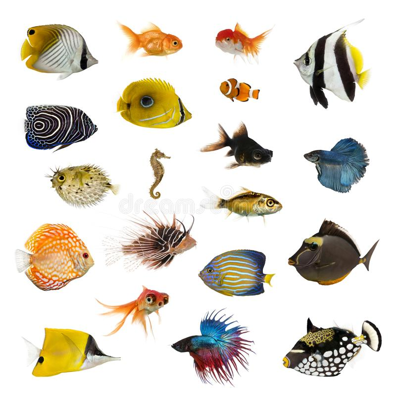 Large collection of fish, pet and exotic, in different position stock image