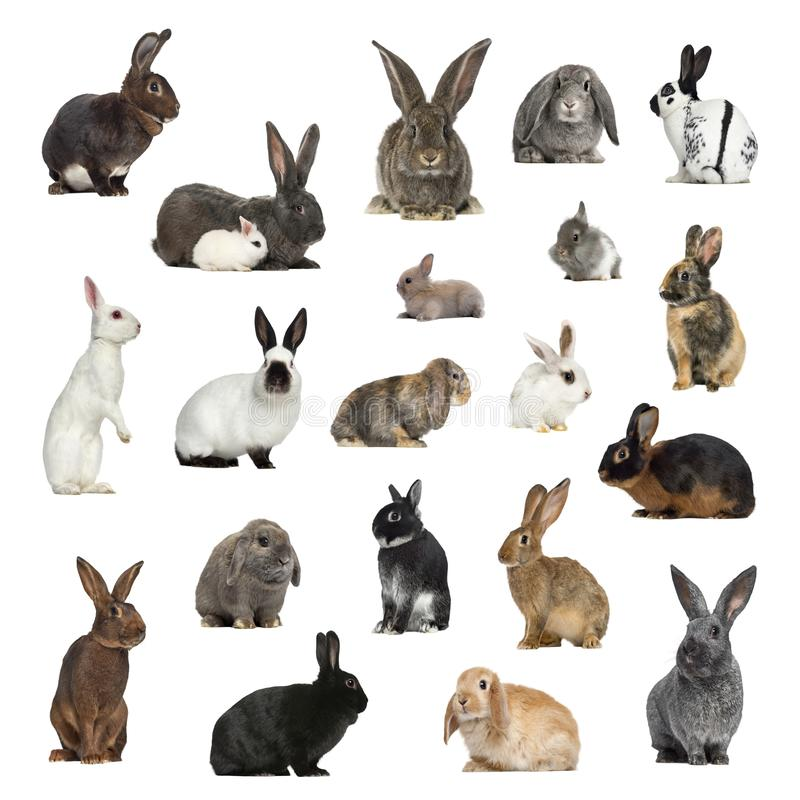 Large collection of rabbit, pet and exotic, in different position royalty free stock photo