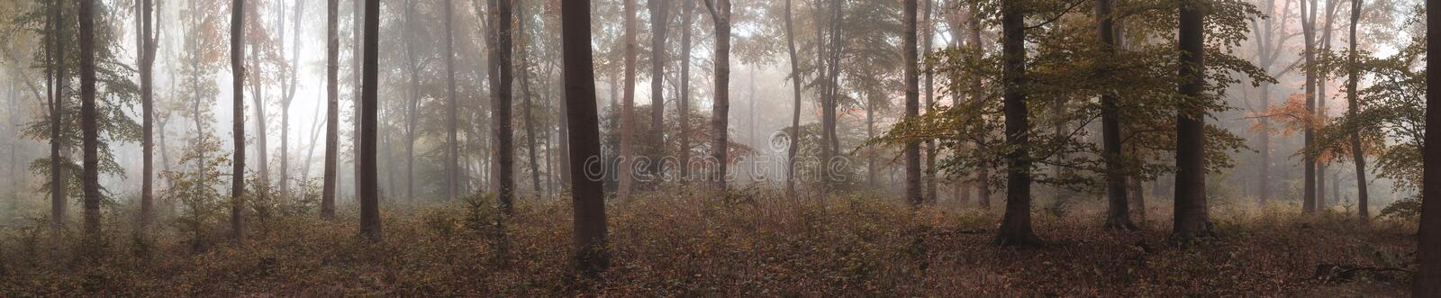 Large colorful panorama foggy Autumn Fall forest landscape royalty free stock images